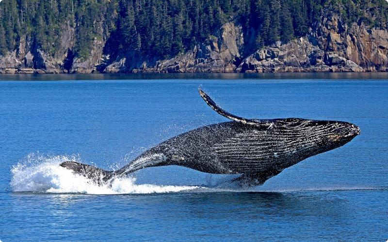 Paus jenis hewan yang hidup di air