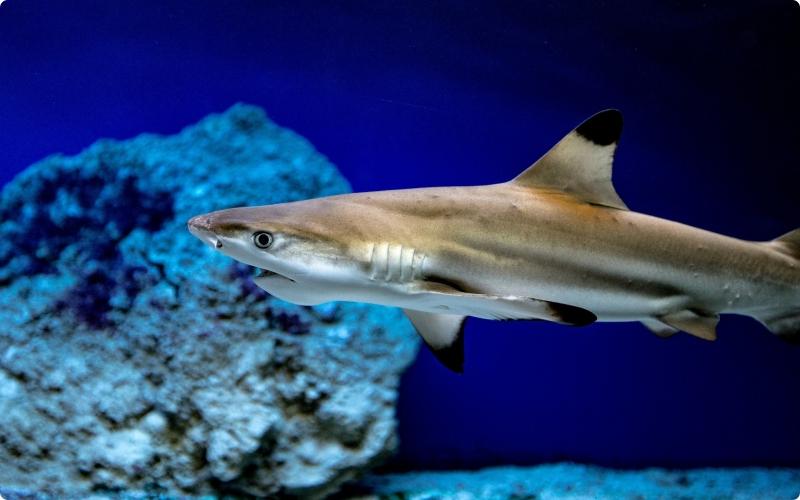 hiu hewan yang hidup di air