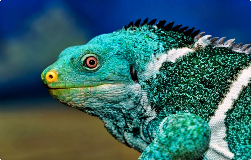 ciri-ciri reptil
