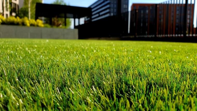 macam-macam rumput