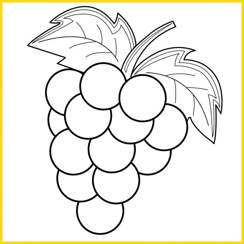 Gambar Sketsa Buah Anggur