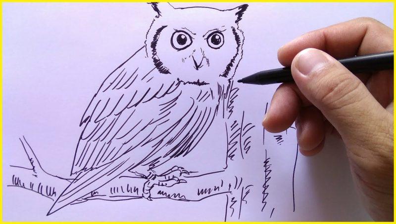 Gambar Sketsa Burung Hantu dengan Spidol