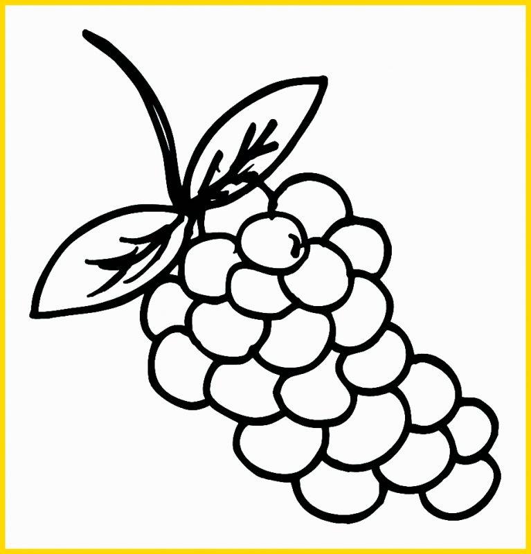 Sketsa Buah Anggur