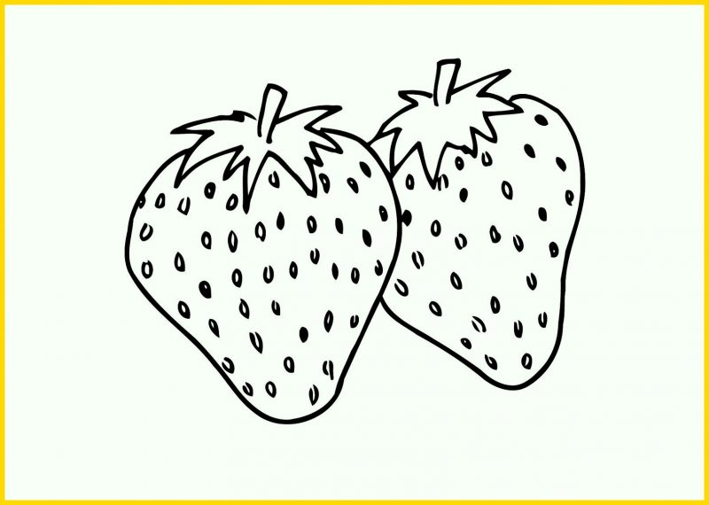Sketsa Buah Strawberry