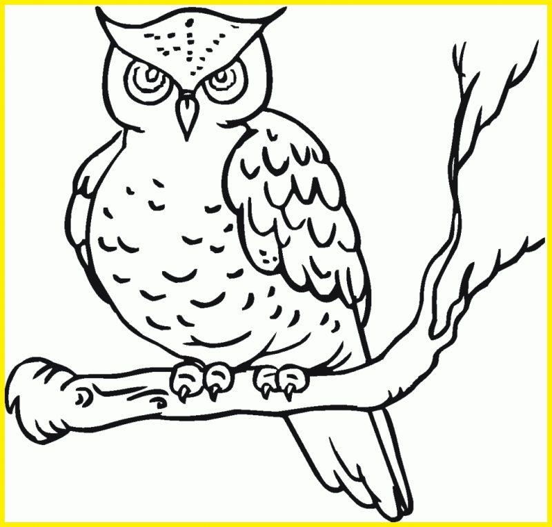 Sketsa Burung Hantu Hitam Putih