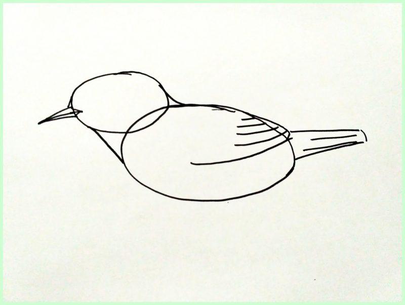 Sketsa Dasar Gambar Burung