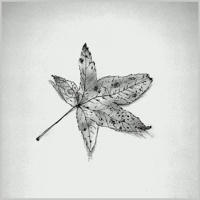Sketsa Gambar Daun Maple Hitam Putih
