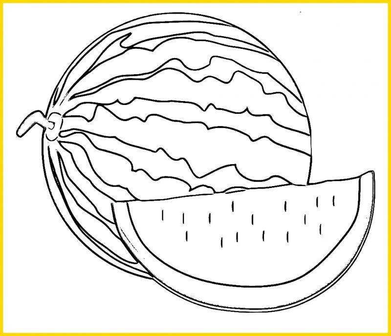 Sketsa buah Semangka dan Potongannya