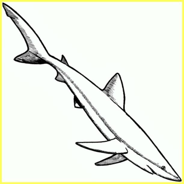 gambar sketsa ikan hiu berenang ke dasar
