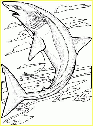 gambar sketsa ikan hiu di udara