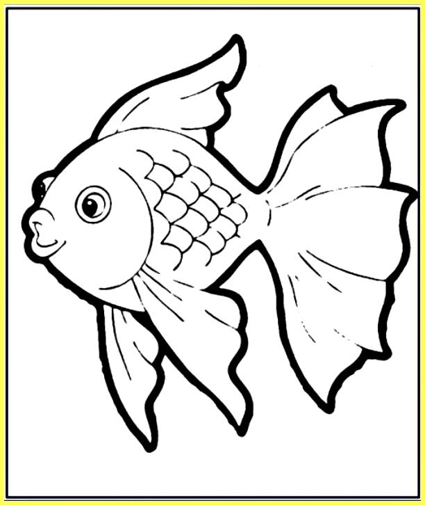 gambar sketsa ikan koi ekor seperti payung
