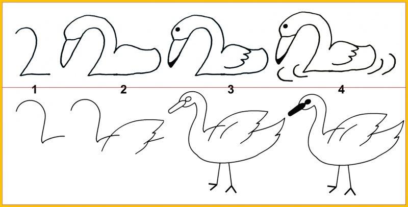 macam macam sketsa bebek