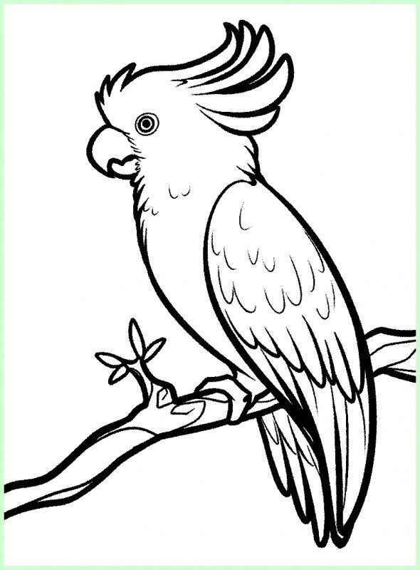 macam macam sketsa burung