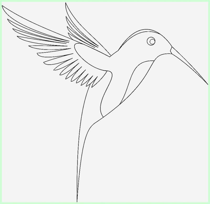 macam macam sketsa gambar burung