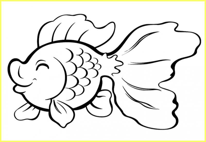 sketsa agambar ikan louhan