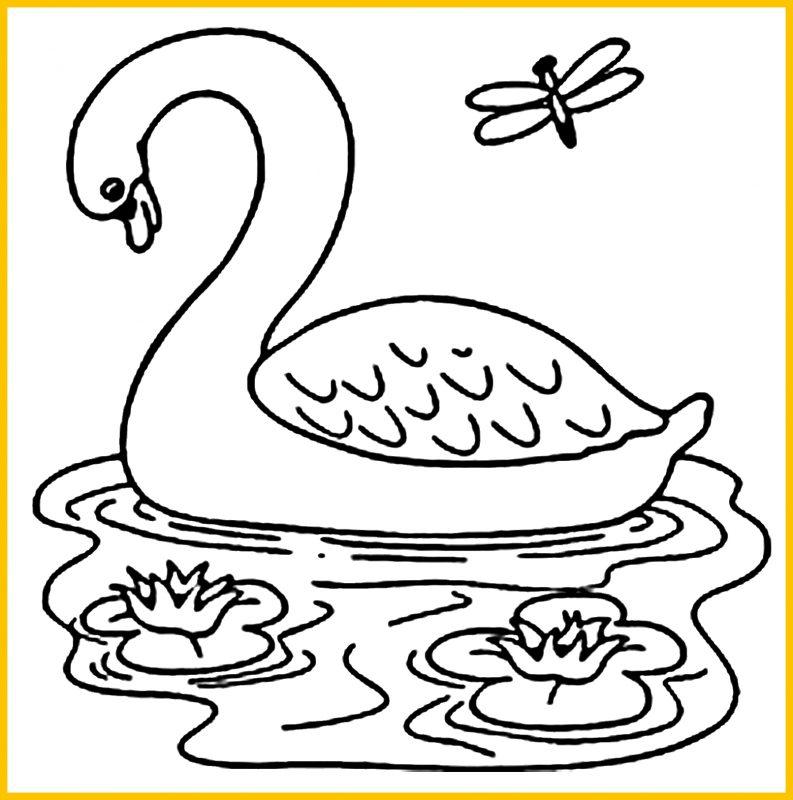 sketsa bebek berenang2