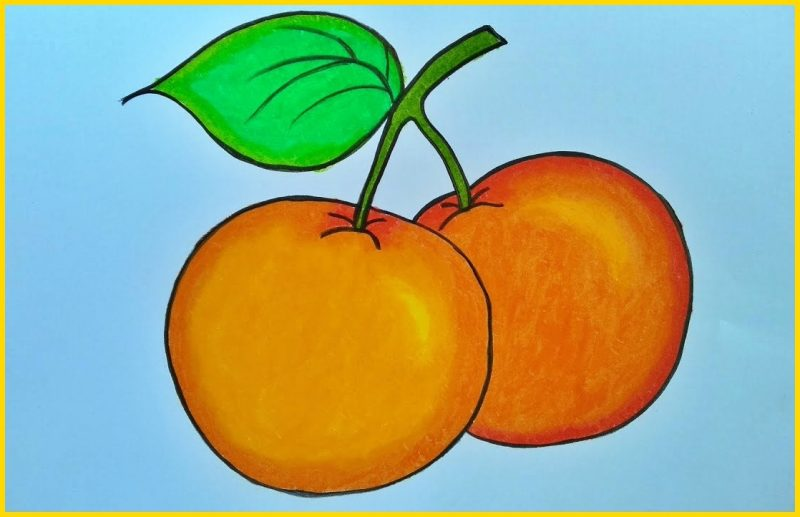 sketsa buah jeruk