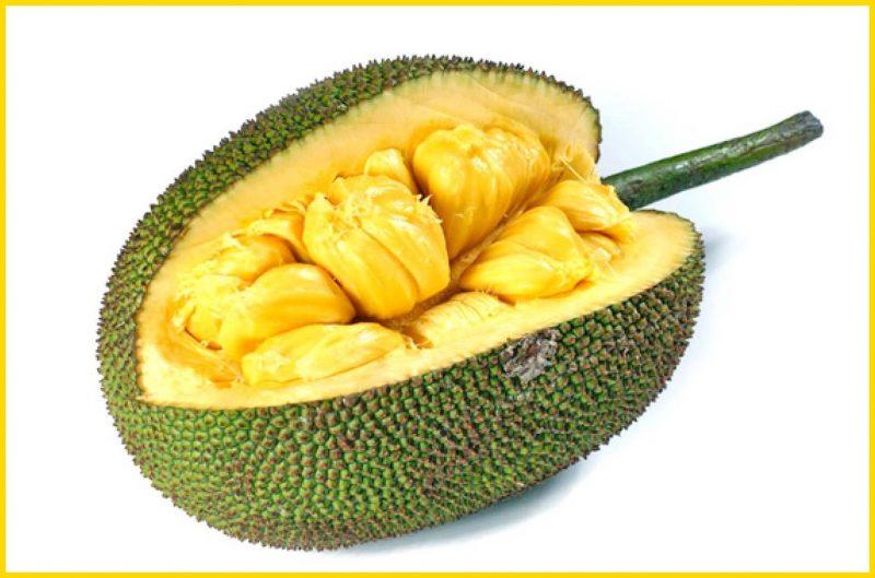 sketsa buah nangka