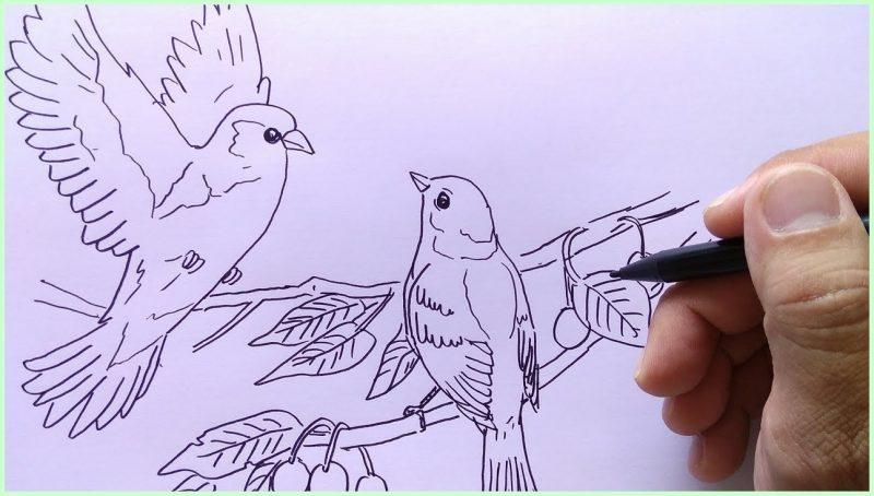 sketsa burung pipit