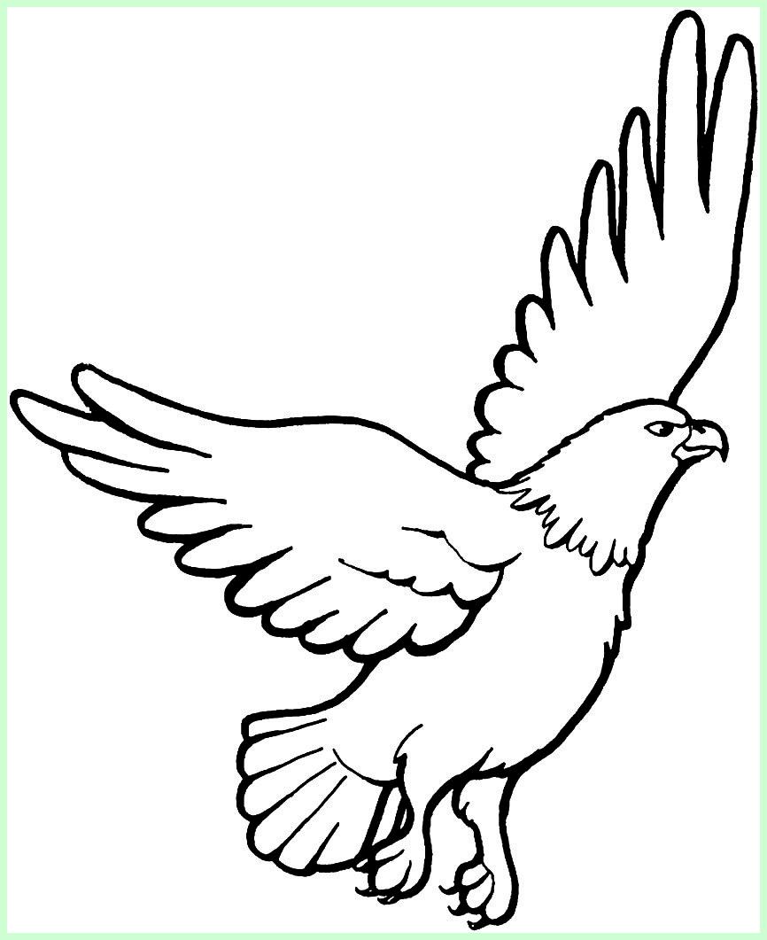 sketsa burung rajawali
