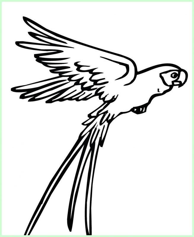 sketsa burung terbang