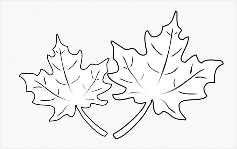 sketsa daun maple