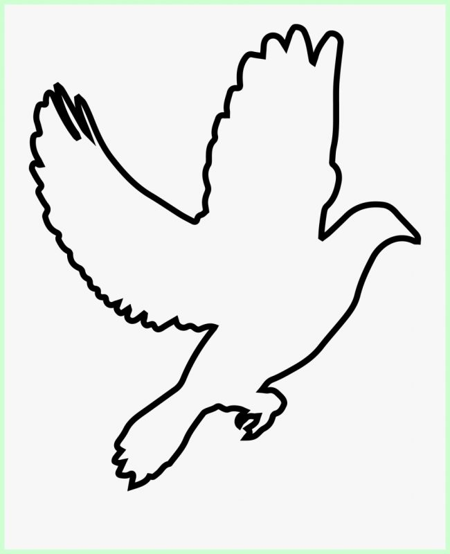 sketsa gambar brung terbang