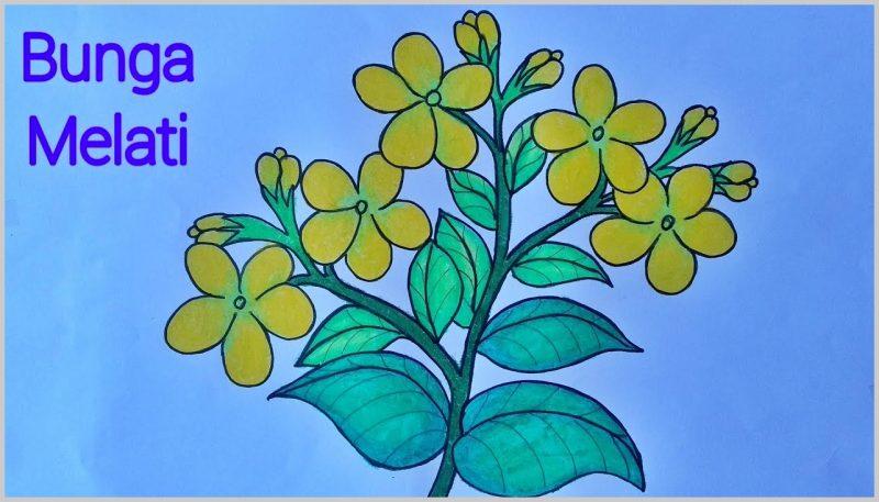 sketsa gambar bunga melati