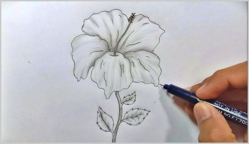 sketsa gambar bunga sepatu