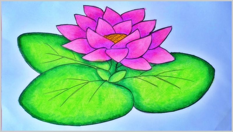 sketsa gambar bunga teratai