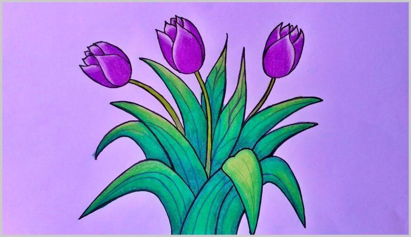 sketsa gambar bunga tulip