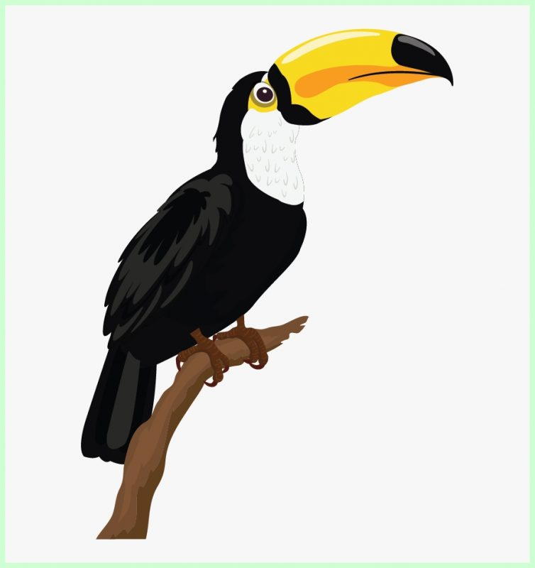sketsa gambar burung beo