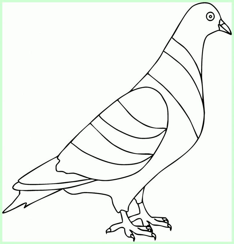 sketsa gambar burung dara