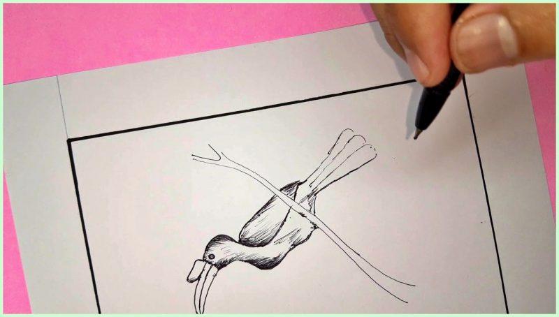 sketsa gambar burung enggang