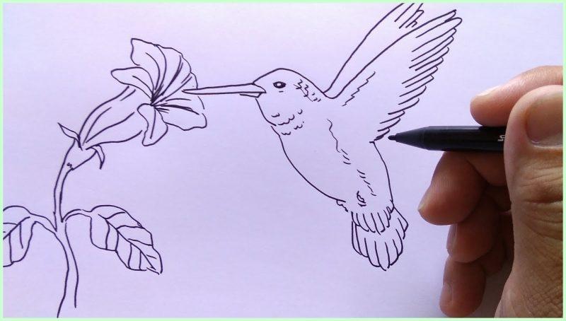 sketsa gambar burung kenari
