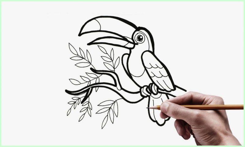 sketsa gambar burung nuri2