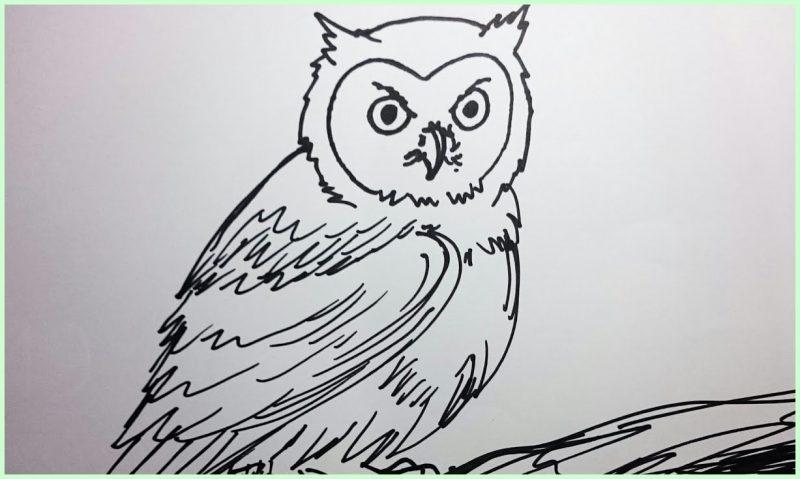sketsa gambar hewan burung lucu