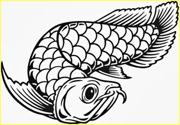 sketsa gambar ikan arwana