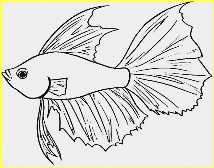 sketsa gambar ikan cupang berbentuk botol