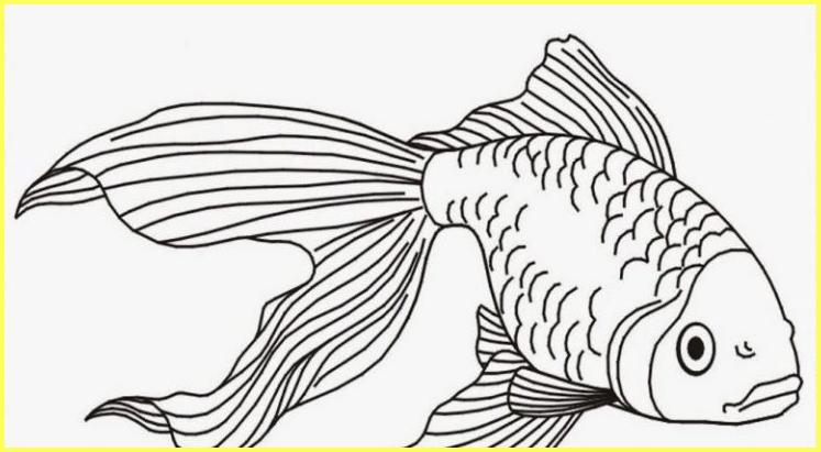 sketsa gambar ikan koi berekor panjang