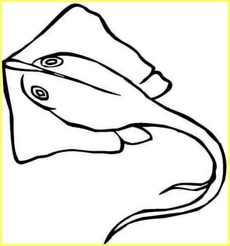 sketsa gambar ikan laut ikan pari