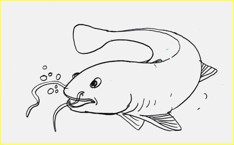 sketsa gambar ikan lele sederhana