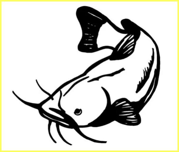 sketsa gambar ikan lele