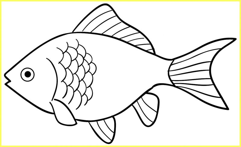 sketsa gambar ikan mas bersisik sedikit