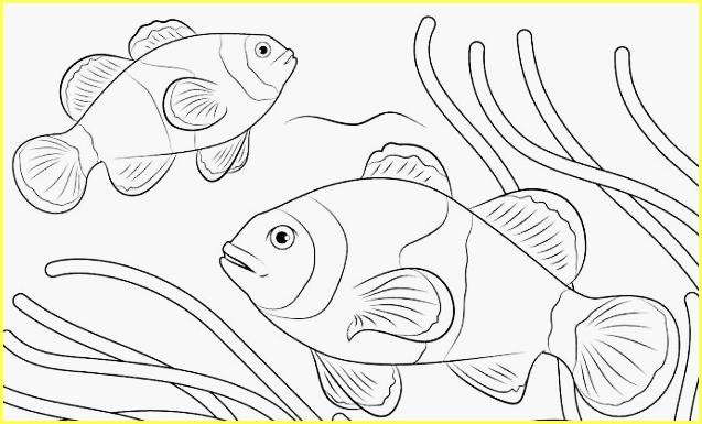 sketsa gambar ikan mas pipih memanjang
