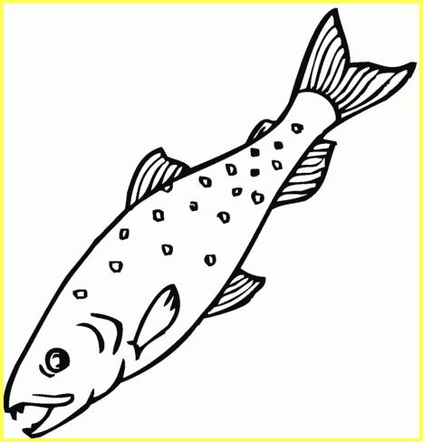 sketsa gambar ikan salmon