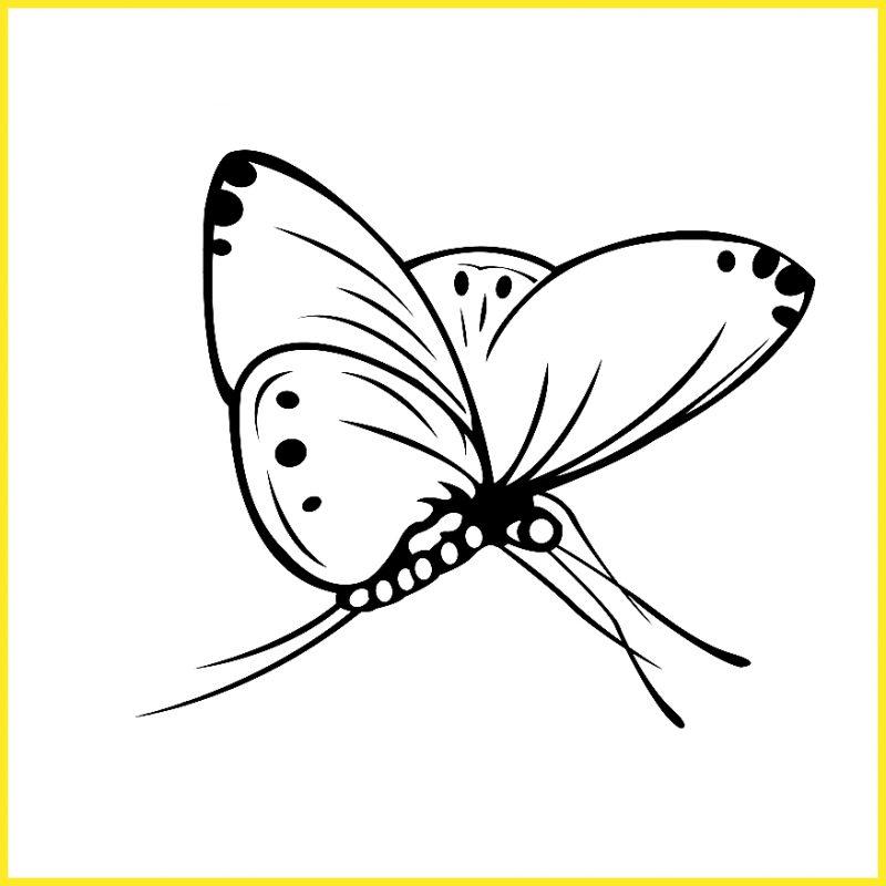sketsa kupu kupu menggepakkan sayapnya