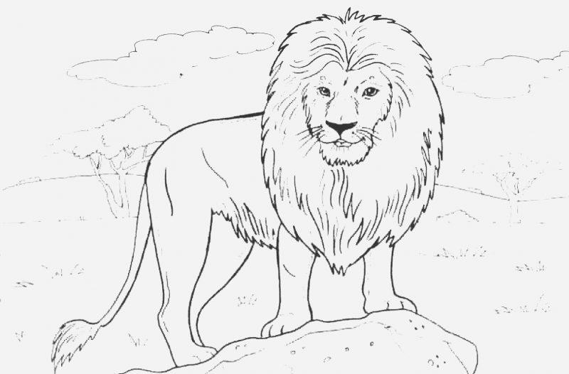 Mewarnai Gambar Singa Kartun di padang rumput