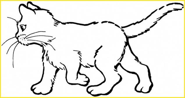 contoh gambar sketsa kucing berjalan