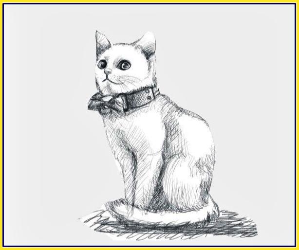 contoh gambar sketsa kucing berkalung